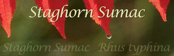 Banner with photo of sumac leaves