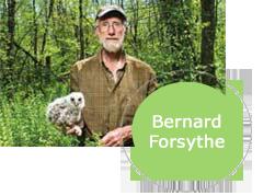 Bernard Forsythe