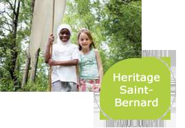 Heritage Saint Bernard
