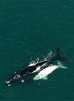 Whale wish