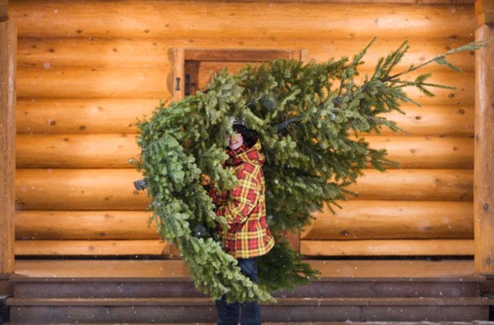 Wildlife Update December 2014 Your Perfect Tree