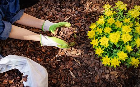 mulch gardening