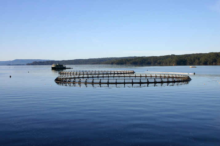 Aquaculture pens in a body of water