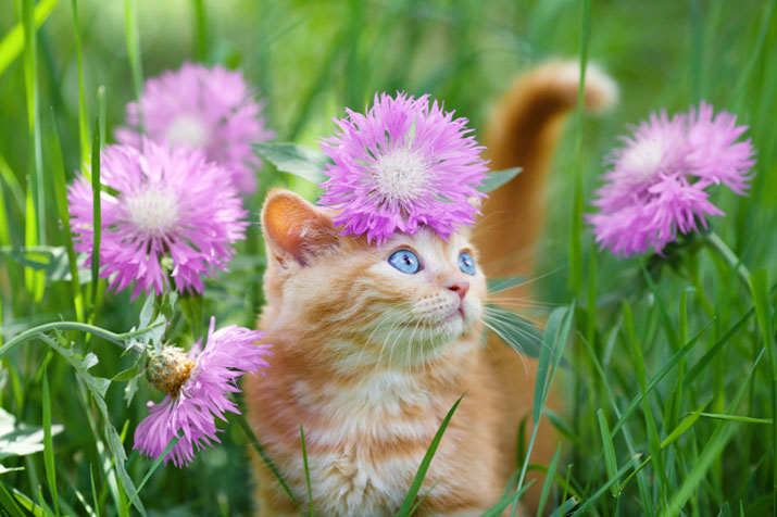 Cat among flowers