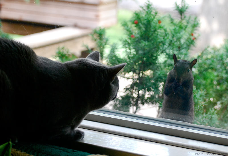 Cat looking at a squirrel through a window