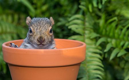 squirrel plant pot
