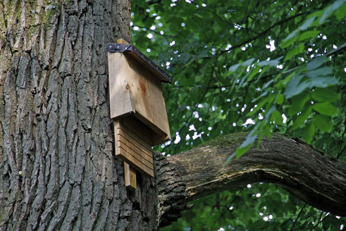 Bat house mounted to a tree