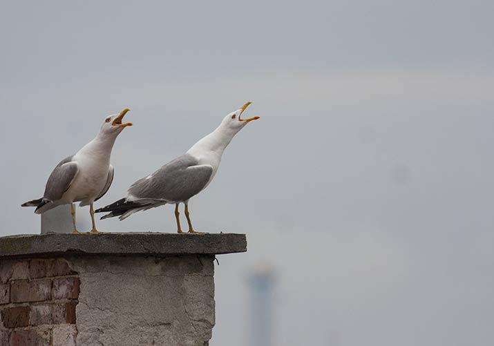 Federation Canadienne De La Faune Un Oiseau S Est Coince Dans Ma Cheminee Comment Le Faire Sortir