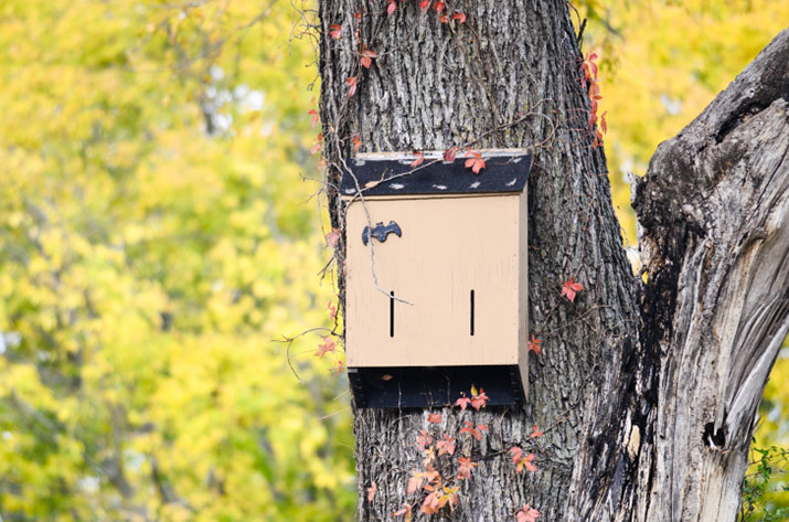Tree in fall with a bat house mounted on it