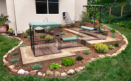 outdoor space for cat
