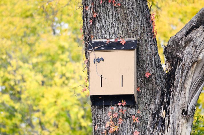 Bat box mounted on a tree