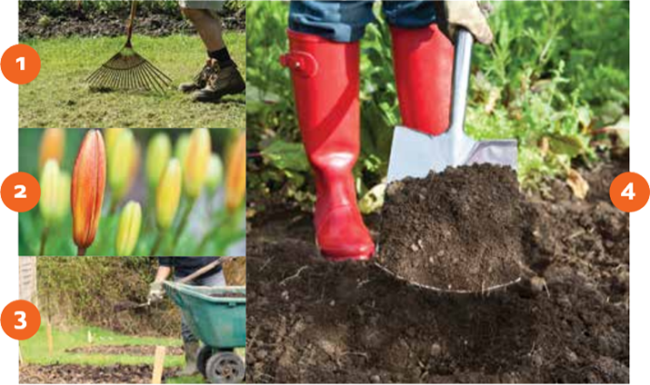 Step by step images of how to prepare your garden