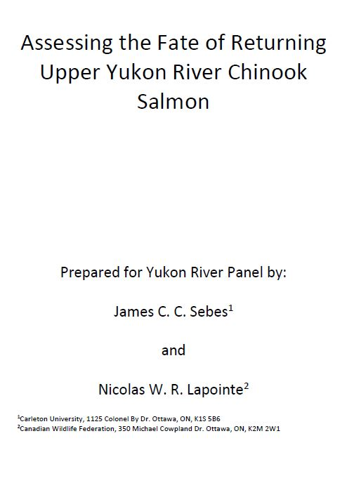 Assessing the Fate of Returning Upper Yukon River Chinook Salmon2017