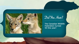 Did you hear that CWF turned 50 this year?