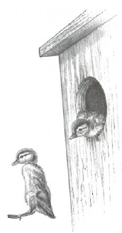 Illustration of a duck habitat