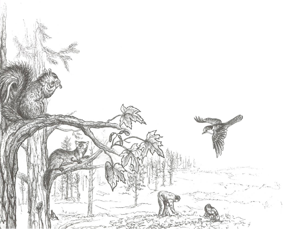 Illustration of a forest edge with birds and squirrels while students plant in their garden