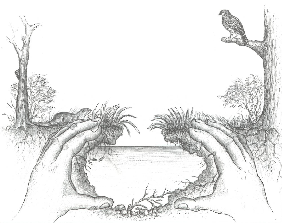 Illustration of wetlands habitat