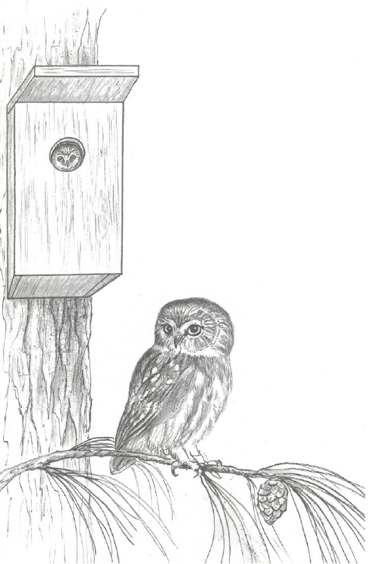 Illustration of bird box mounted on tree