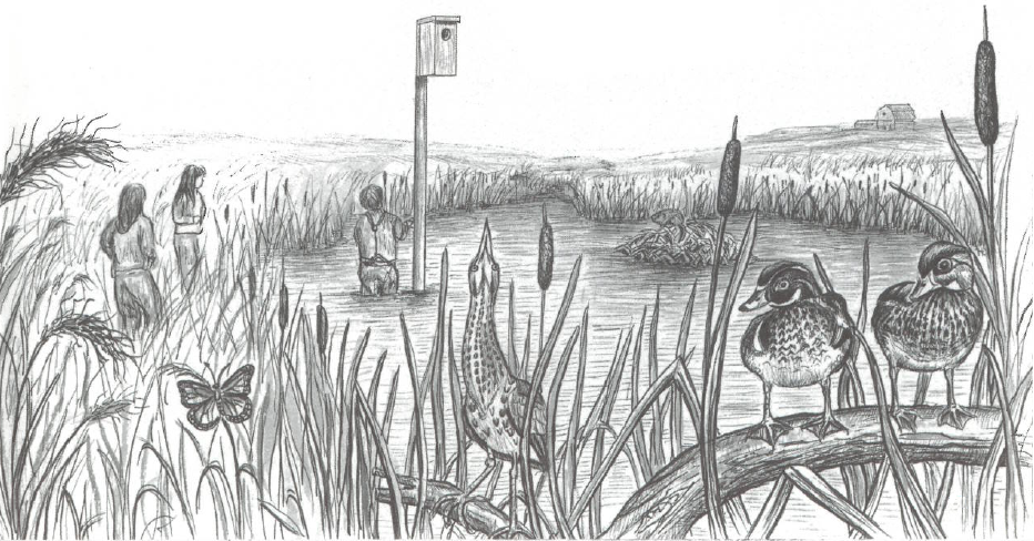 Illustration of birds by a pond